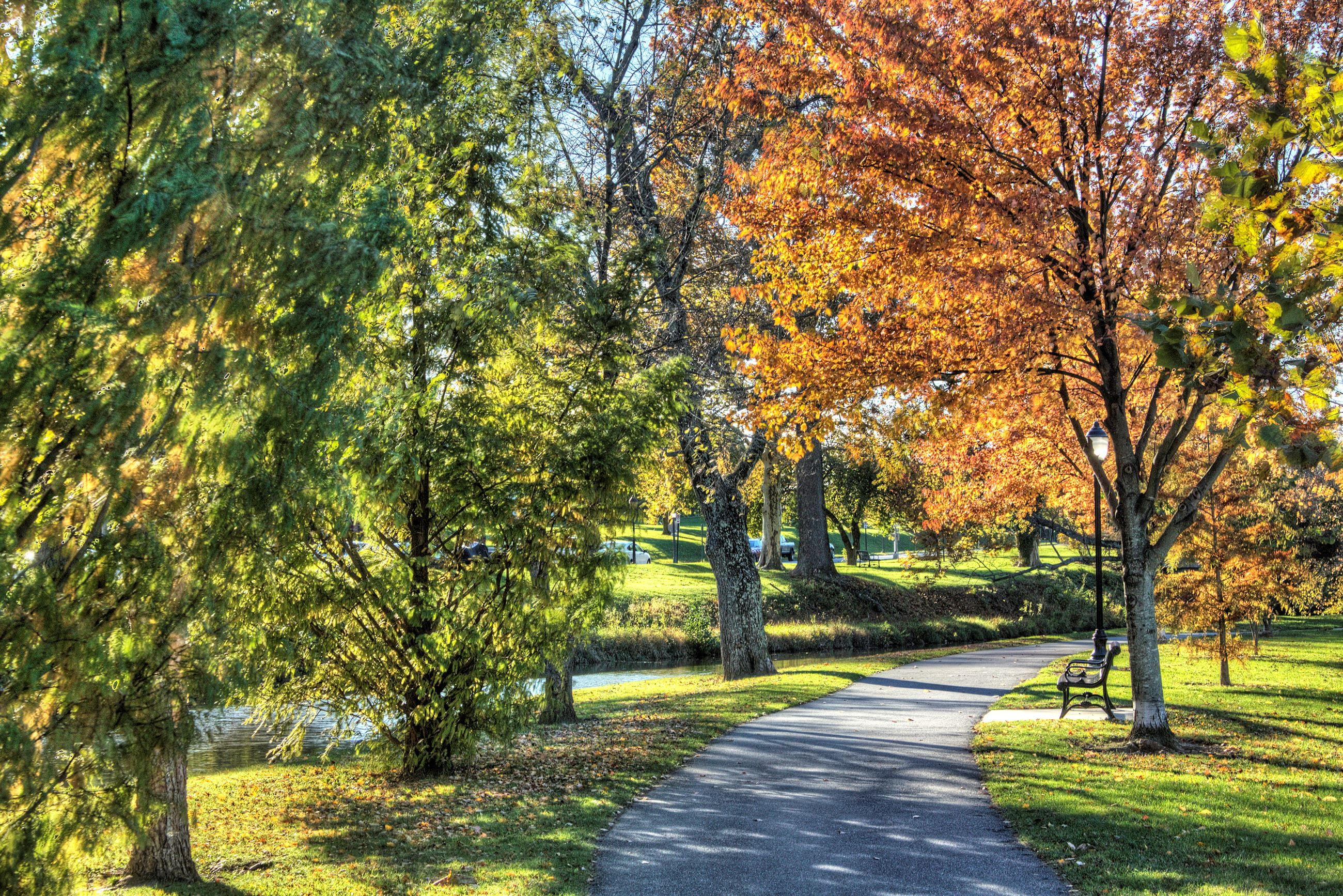 Paved walkway through autumn trees along a small waterway